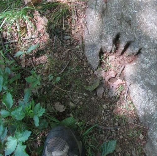 отпечаток лапы динозавра