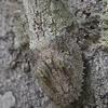 искусство камуфляжа геккона
