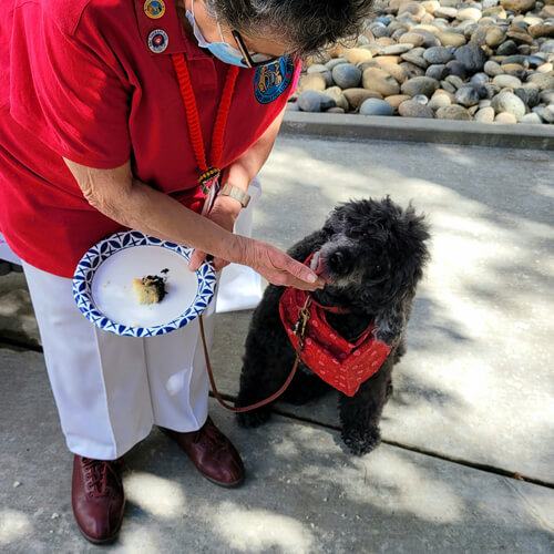 вечеринка для собаки перед пенсией