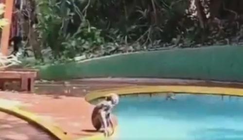 обезьяны радуются жизни в бассейне