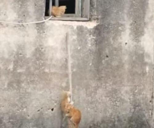 урок скалолазания от кошки