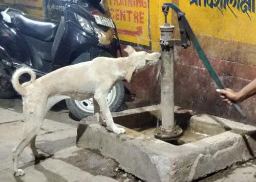 добряк помог собаке напиться