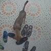собака украла кроссовки