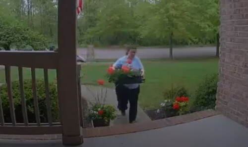 хозяйка уничтожила цветы