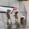 щенков не остановит клетка