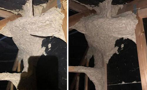 паранормальное гнездо на чердаке
