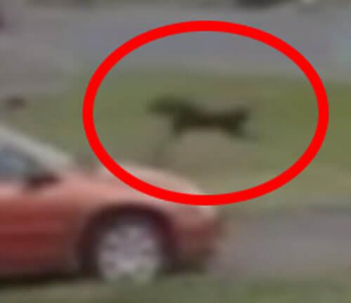 пёс взлетел из-за пыльного дьявола