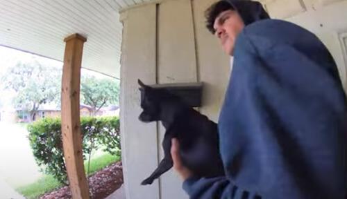 собаке не на кого лаять