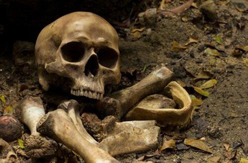 человеческие останки в подвале