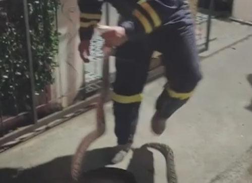 змеелов извлёк питона из унитаза