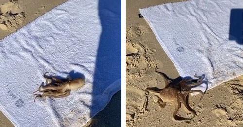 знакомство с осьминогом на пляже