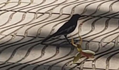 богомол не испугался птицу