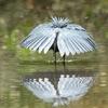 цапли превращаются в зонтики