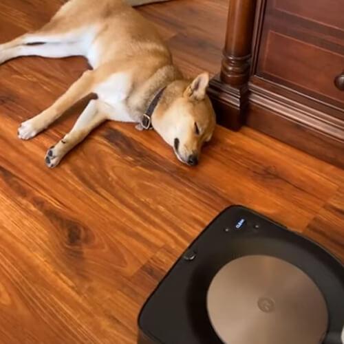 робот-пылесос и спящий пёс