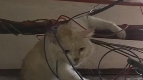 кошка запуталась в проводах