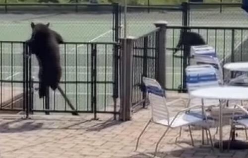 медведи на вечеринке у бассейна