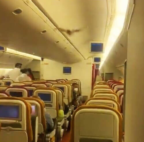 летучая мышь на самолёте