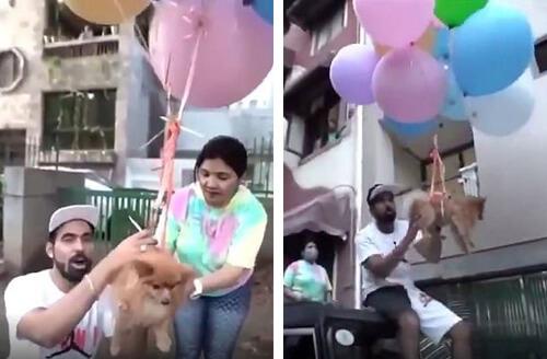 пёс летит на воздушных шариках