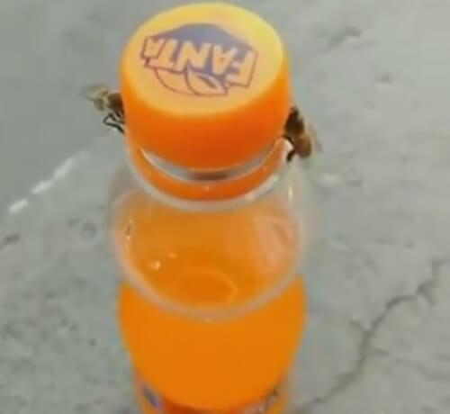 пчёлы добрались до газировки
