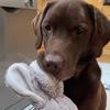 игрушки пса отправляются в стирку