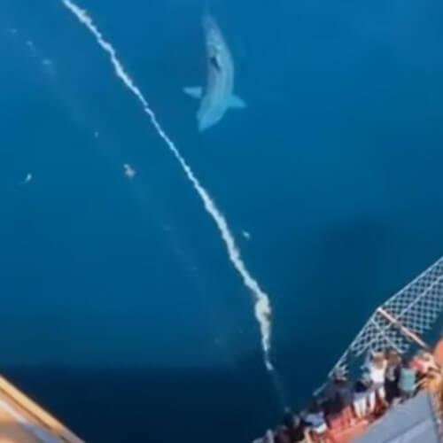 видеоролик с гигантской акулой