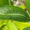 гусеница на древесном листе