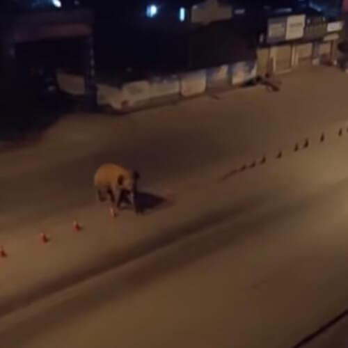 стадо слонов под покровом ночи