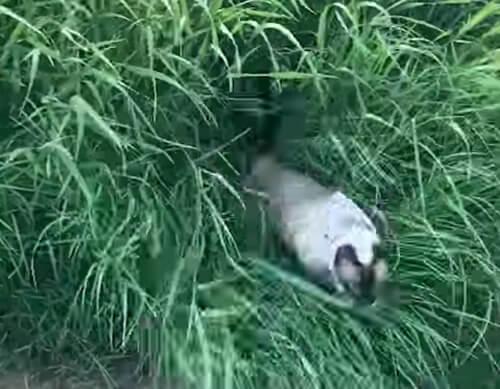 кошка не заблудится в траве