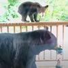 медведи и птичья кормушка