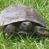 черепаха знает где трава зеленее