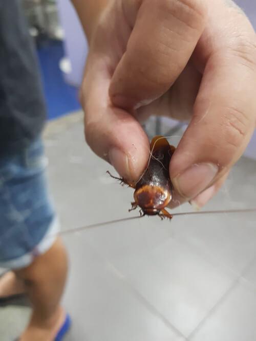 таракана принесли в ветклинику
