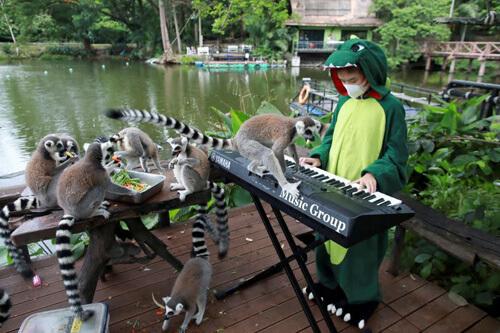 концерты для животных в зоопарке
