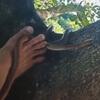 встреча со змеёй на дереве