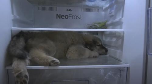 холодильник охладил щенка