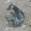 бездомная собака в грязи