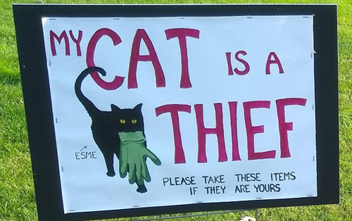 кошка крадёт у соседей вещи
