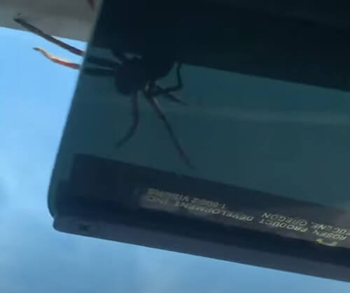 крупный паук на потолке самолёта