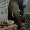 слон проломил кухонную стену