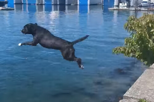 собака обожает нырять и летать