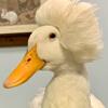 красивая причёска утки
