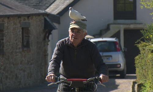 пенсионер подружился с голубем