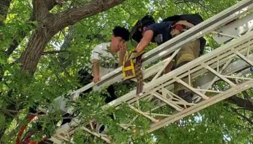 хозяин в ловушке на дереве