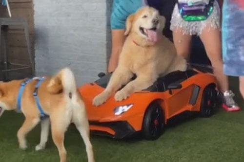 вечеринка на день рождения пса