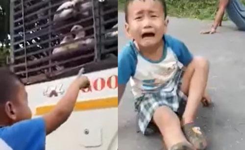 мальчик просит не увозить кур
