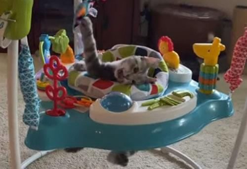 кошка в детском кресле