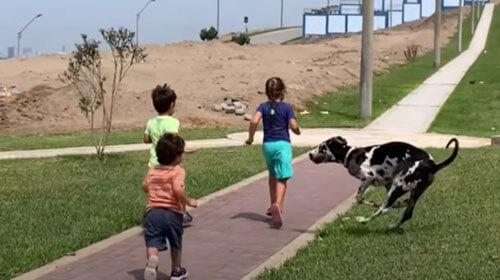 слишком активный щенок