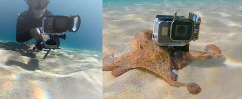 осьминог с чужой видеокамерой