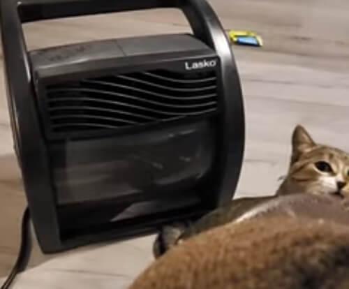 кошка ловит воздух