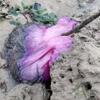 странное липкое существо на пляже