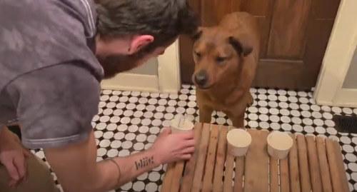 пёс задул свечи на лакомстве